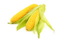 Corn on the cob isolated white background Royalty Free Stock Images