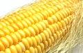 Corn on the cob kernels close up shot Stock Image
