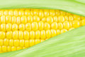 Corn cob on the with leaves close up Stock Photography