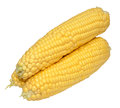 Corn on the cob three raw uncooked sweet isolated a white background Stock Image