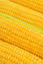 Corn Cob woith golden seed Royalty Free Stock Photo