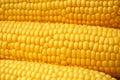 Corn on Cobb Royalty Free Stock Photo