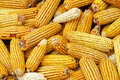 Corn cobs Stock Images