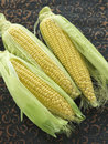 Corn on the cobs Stock Image