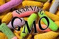 Corn cobs, symbolizing GMO Royalty Free Stock Photo