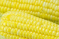 Corn detail the close up isolated Royalty Free Stock Photo