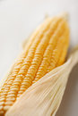 Corn in the drops of water in a perspective close up Royalty Free Stock Photos