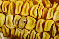 Corn dry rot Royalty Free Stock Photo