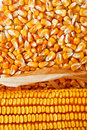Corn ear Stock Photography
