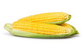 Corn ear group on white background Royalty Free Stock Photo