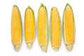 Corn ear group on white background Stock Photos