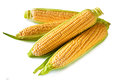 Corn an ear of isolated on a white background Stock Images