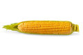 Corn an ear of isolated on a white background Royalty Free Stock Images