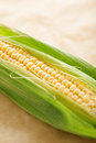 Corn ear of young on a light brown background Stock Photo