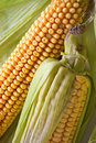 Corn in ears Stock Images