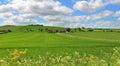 Corn english landscape ripening rural 免版税库存图片
