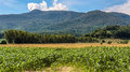 Corn farm with mountain and blue sky in uttaradit province of thailand Royalty Free Stock Images