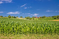 Corn field in agricultural rural landscape prigorje region croatia Royalty Free Stock Image
