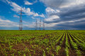 Corn field and power lines Royalty Free Stock Photo