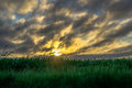 Corn field at sunrise Royalty Free Stock Photo