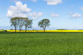 Corn field with trees blue sky and tractor idyllic scene Royalty Free Stock Photography