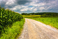 Corn fields along a dirt road in rural Carroll County, Maryland. Royalty Free Stock Photo