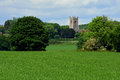 Corn Fields & Church, Shotesham, Norfolk, England in June. Royalty Free Stock Photo
