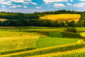 Corn fields and rolling hills in rural york county pennsylvania Stock Photo