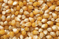 Corn grains Royalty Free Stock Image