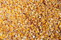 Corn grains bunch of many Stock Photography