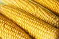 Corn grains of ripe closeup background Royalty Free Stock Image