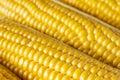 Corn grains of ripe closeup background Royalty Free Stock Photos