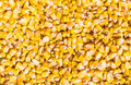 Corn grains of a ripe husked from cob texture Stock Photography