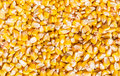 Corn grains of a ripe husked from cob texture Stock Photo