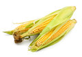 Corn group Royalty Free Stock Photos
