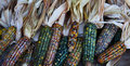 Corn Husks Royalty Free Stock Photo