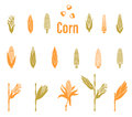 Corn icons. Agriculture Logo template.