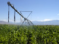 Corn irrigation Stock Image