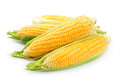 Corn isolated Royalty Free Stock Photo