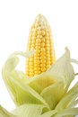 Corn isolated on white background Royalty Free Stock Photography