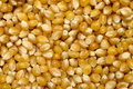 Corn kernel Royalty Free Stock Photography