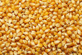Corn kernels arranged as the background for raw food Royalty Free Stock Photo
