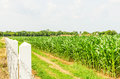 Corn maize field agriculture land in countryside Stock Photos