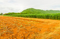 Corn maize field agriculture land in countryside Stock Image
