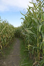 Corn maze pathway through a Stock Image