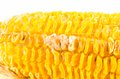Corn with mold became rotten Royalty Free Stock Image