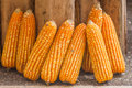 Corn Plants Royalty Free Stock Image