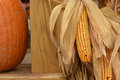Corn and pumpkins Royalty Free Stock Images