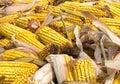 Corn rot Royalty Free Stock Photo