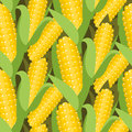 Corn seamless pattern vector illustration. Maize ear or cob.